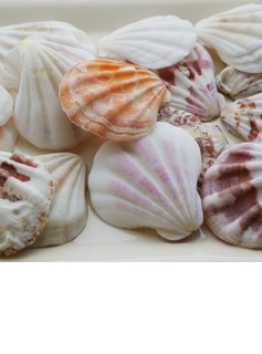 Beach Theme Shell Decorative Accessories (40 Pieces) (131036844)
