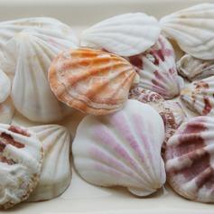 Beach Theme Shell Decorative Accessories (40 Pieces) (131036844)